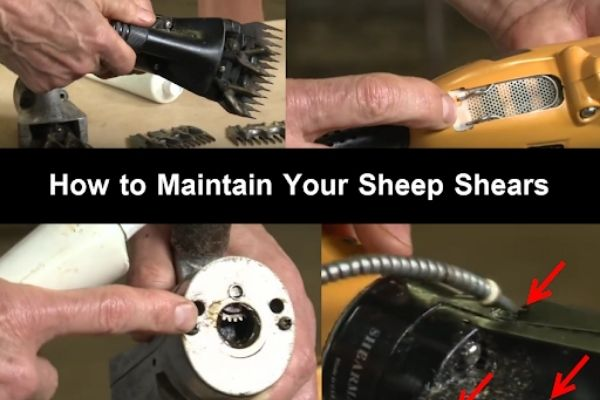 Maintenance Tips for Your Electric Sheep Shears