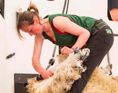 Experienced Sheep Shearer